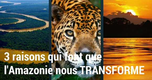 Foret amazonienne faune