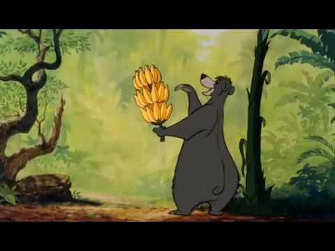 Ours dans le livre de la jungle