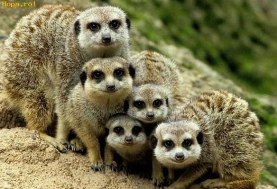 Famille des animaux